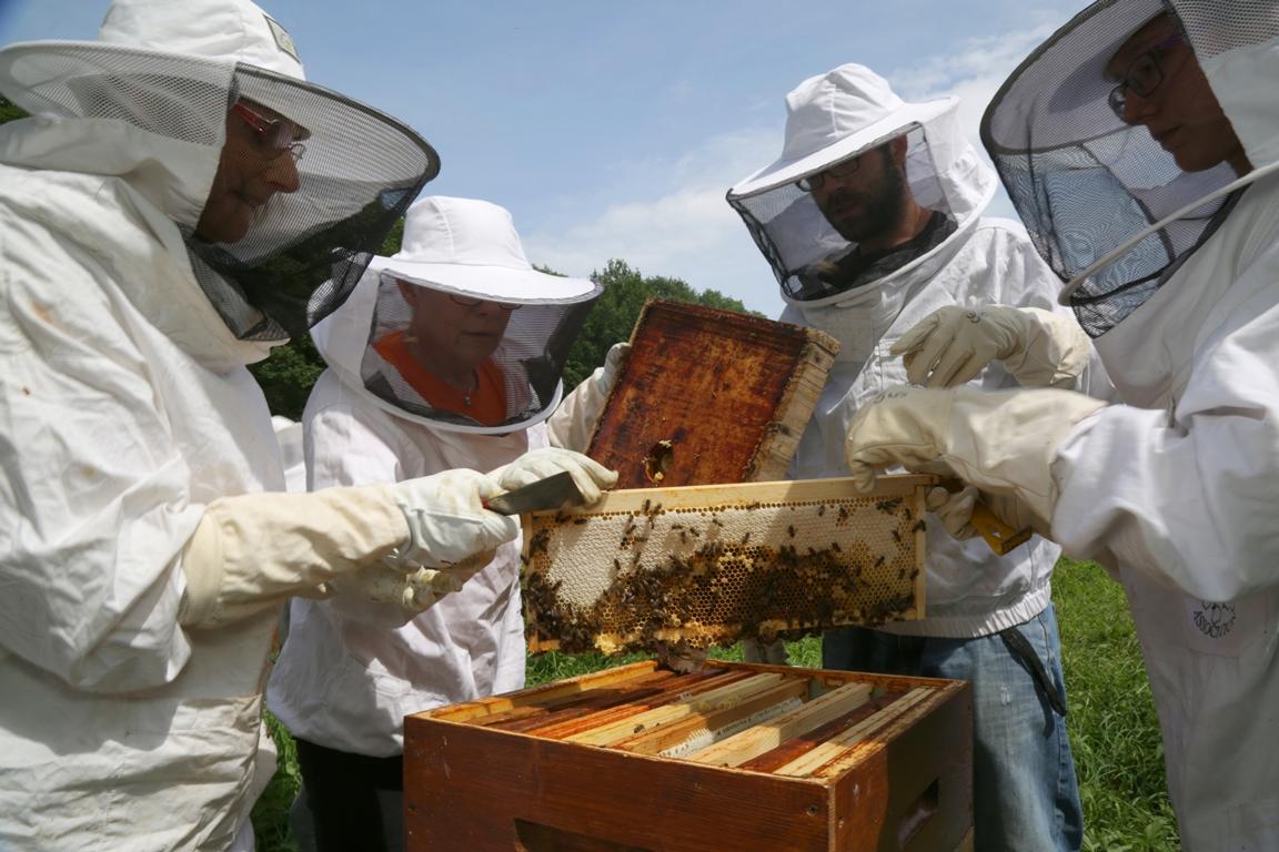 Ocelles + ruche