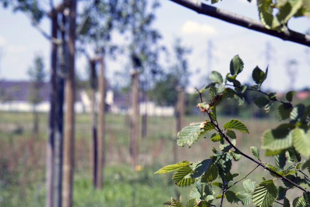 Les plantations du futur bois de l'écoquartier