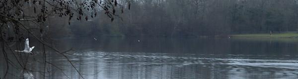 base de loisirs, île aux loisirs, étangs, cergy-pontoise, vol du cygne