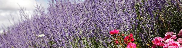 parterre de fleurs, cergy-pontoise