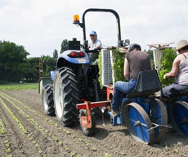 plantation de semis de salade, exploitation Bourven, Cergy