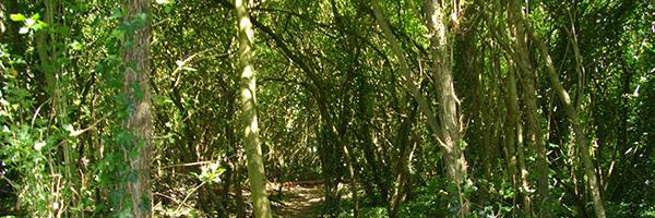 Sous bois d'aubépines à la Sente des Prés - Éragny-sur-Oise, Cergy-Pontoise