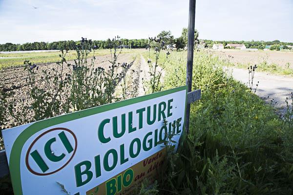 plaine agricole3