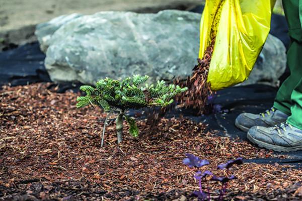 Jardinage naturel et paillage