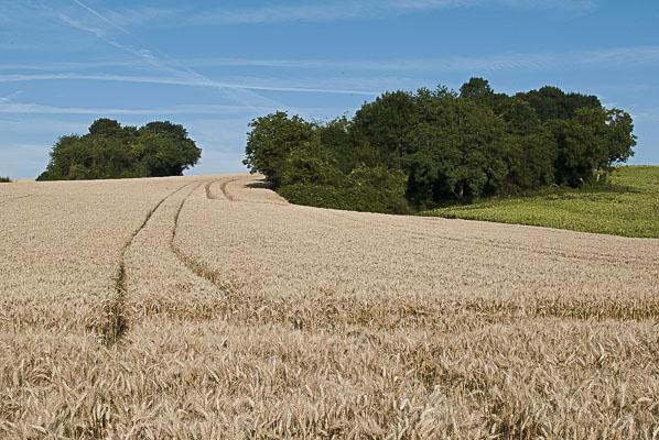 chemin de Glatigny