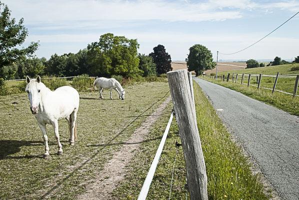 chevaux.