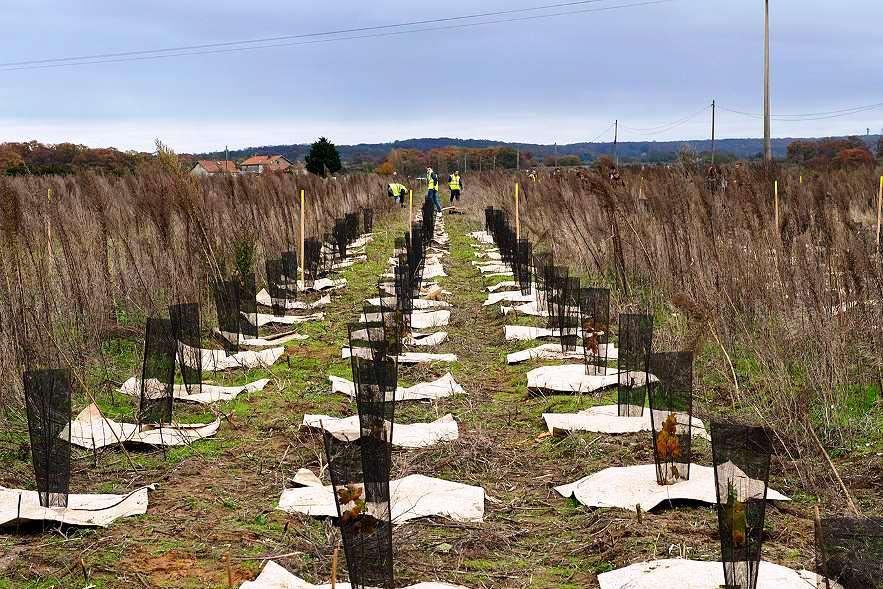 Les premières arbres de la forêt de Pierrelaye