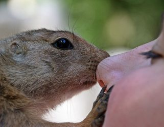 https://13commeune.fr/wp-content/uploads/2019/12/african-bush-squirrel-Myriam-Zilles_Pixabay-321x250.jpg