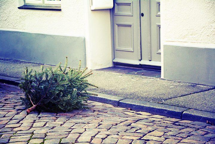 sapin dans la rue