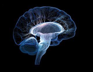 https://13commeune.fr/app/uploads/2020/02/nerves-brain-155318618-321x250.jpg