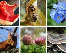 Blog nature en ville à Cergy-Pontoise