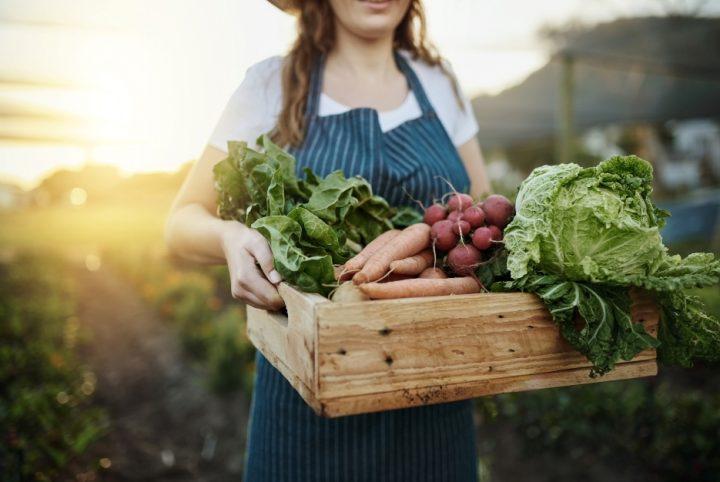 légumes vente directe