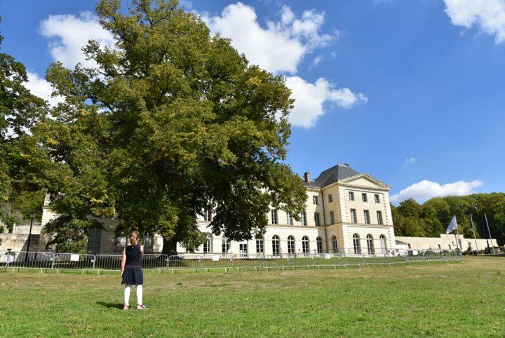 Le tilleul du parc de Grouchy à Osny