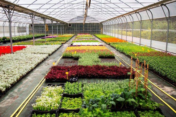 centre de production végétale de la communauté d'agglomération