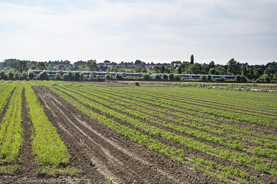 plaine agricole