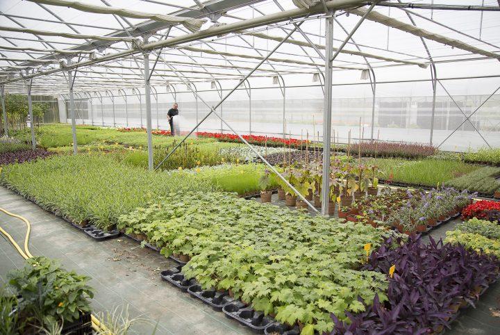Les serres du Centre de production végétale de l'agglomération de Cergy-Pontoise